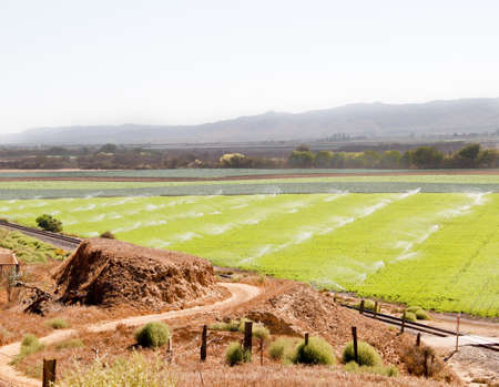 curving dirt road leading to fertile green farmland field being watered by multiple backlit sprinklers