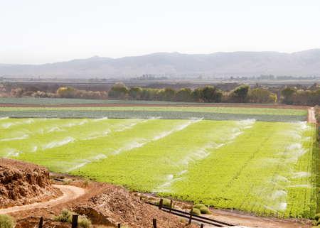Geschwungene unbefestigte Straße, die zu grünen Ackerlandfeld fruchtbaren durch mehrere hinterleuchtete Sprinkler bewässert Standard-Bild - 33394206