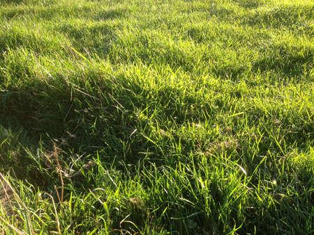 luscious: Luscious green grass Stock Photo