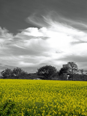 Rapeseed in Perfect Isolation