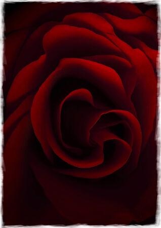 Rose Frayed Edges