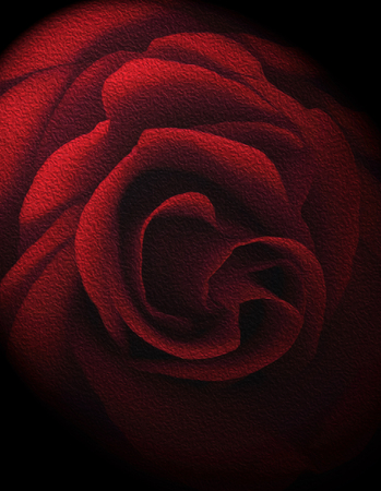 Textured Red Rose