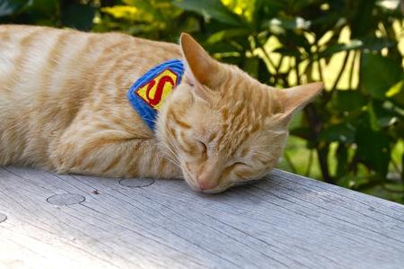 pause repas: Chat couch� sur une chaise pour paresseux pause d�jeuner