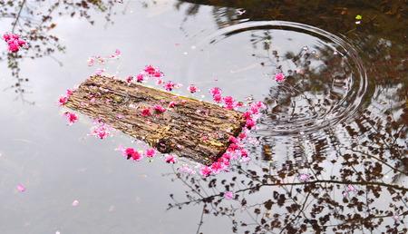 drop in: Flower drop in pond Stock Photo