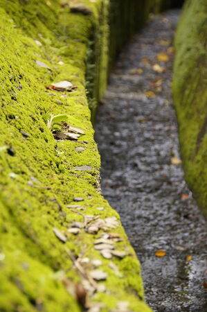 The paved road with moss in mountain photo
