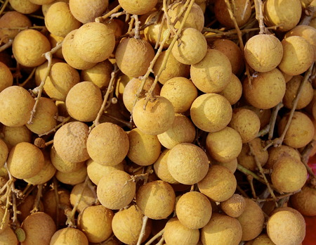abound: Longan, a delicious Asian fruit abound in the summer