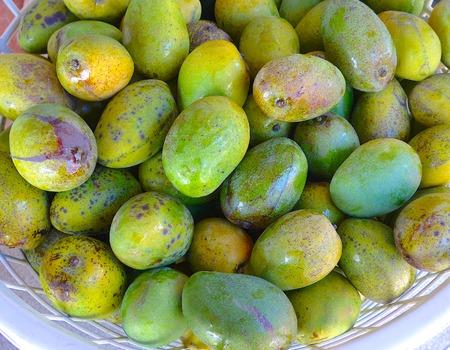 The close view of mango in Taiwan Stockfoto