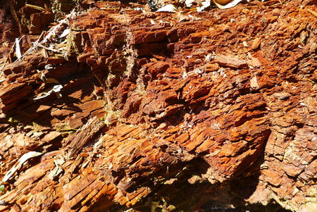 decaying: Close up of tree trunk