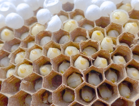 Bee combs with bee eggs close up Reklamní fotografie