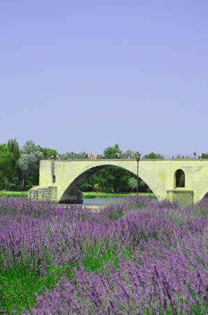 View of the Pont St-Benezet and Provence lavender flower photo