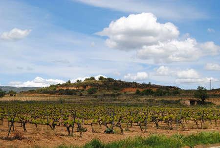 catalunya: Penedes vineyards  Catalunya