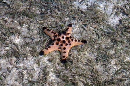palawan: Estrellas de mar en Palawan Filipinas