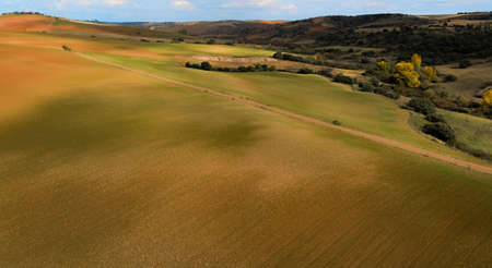 Aerial view of agricultural fields with yellow and green tones and contrasts of light and shadow.