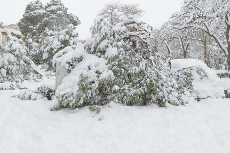 trees fallen from the weight of snow on branches in the city of Guadalajara in Spain after storm Filomena Reklamní fotografie