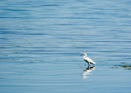 A bird sitting in shallow water in a lake