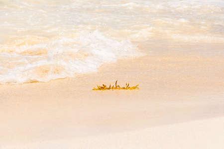 Les algues sur la plage et les vagues Banque d'images