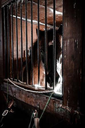 A cheval sur son paddock avec la lumière du soleil.