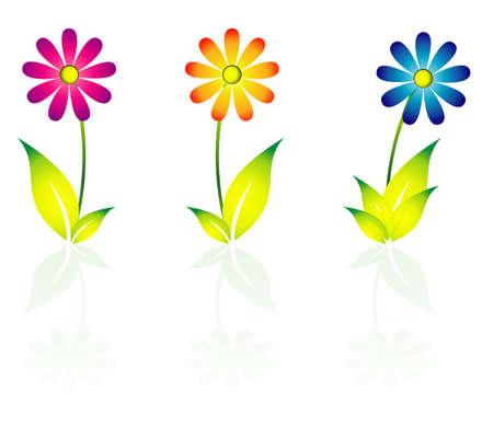 Daisy Flowers icon Vector