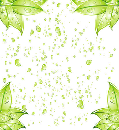 Leaves Background with water drops background Stock Vector - 4897353