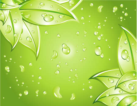 Leaves Background with water drops background Vector