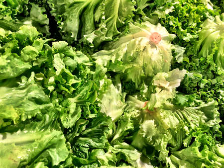 rocket lettuce: Close up of a big box of Salad at the super market in vegetables section.