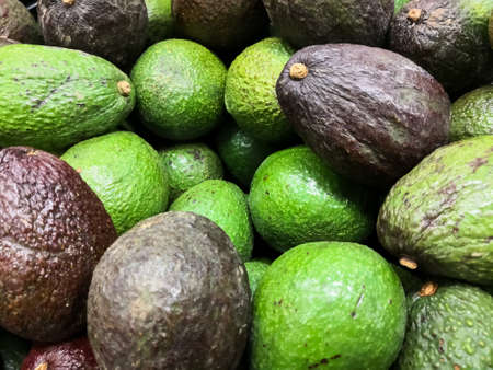 Close-up of Hass avocado heap with a typical dark green and green colored, bumpy skin.  Persea americana avocado cultivar made by Rudolph Hass Stock Photo