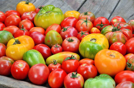 Different maturity degree fresh farm tomatoes on wooden background
