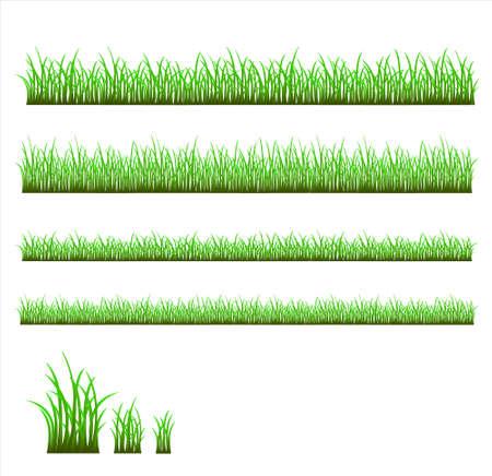 grass vector: Green grass vector Illustration
