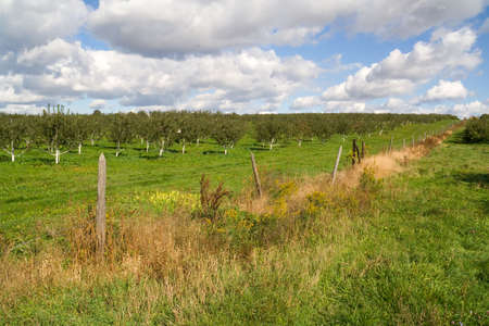 Panoramic landscape of an apple orchard with a beautiful sky and fence. photo