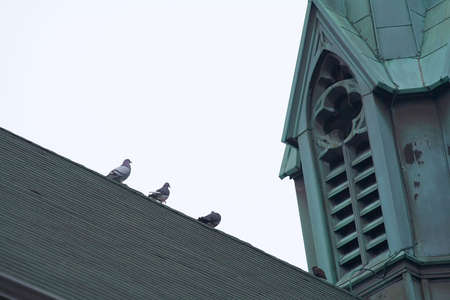 strut: Pigeons strut along the apex of a church roof. Stock Photo