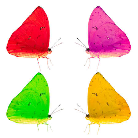 the antennae: Four colorized butterflies presented in a geometric pattern, isolated against a white background. Stock Photo