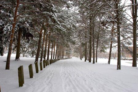 winter road: Winter Road Stock Photo