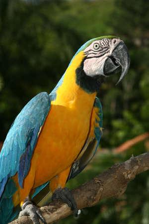 macaw, guacamaya Stock Photo