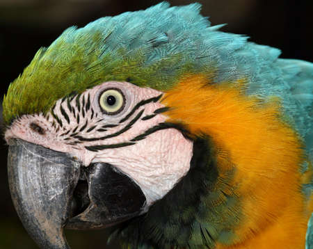 Macaw details