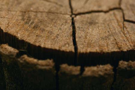 arbol: La madera de textura