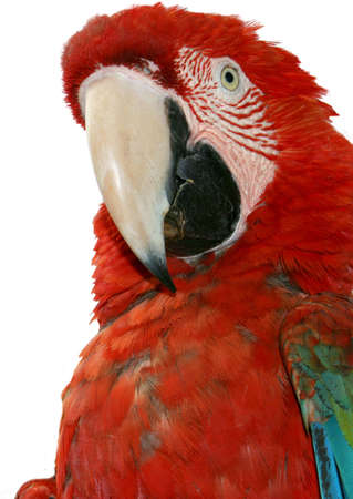 Tropical Macaw Stock Photo - 2813248