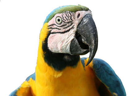 macaw, parrot Stock Photo - 2813251