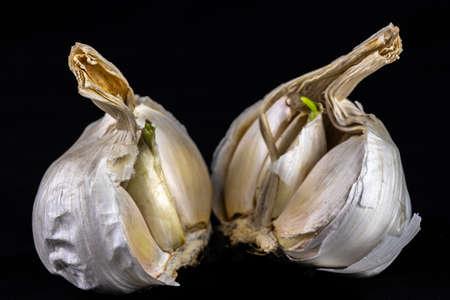 Garlic (Allium sativum) isolated on a dark background