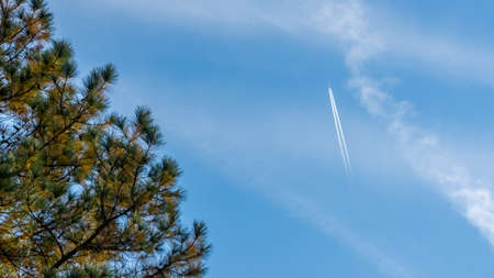 Plane with trails flying hign in sky with pine tree in foreground