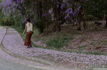 Asian woman in sarong walking away on sidewalk covered with wisteria petals and flowering wisteria plants
