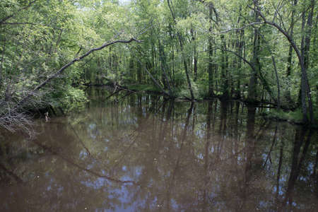 Swampy river off highway in Virginia with reflection in the water