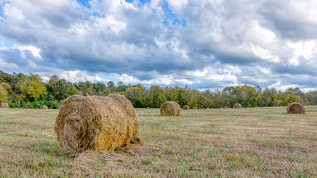 Bale of straw haw in a filed on a stormy day in Orange County North Carolina