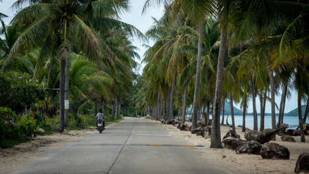 Motorcyclist riding motorcycle down palm tree lined beach in Ben Krut Thailand 版權商用圖片