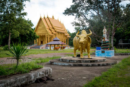 Golden Thai Wat with golden water buffalo statue in front and blue sky in the background 免版税图像