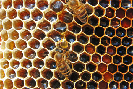 honey tone: On the left grown honeycombs which honey is in.