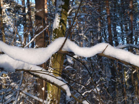 admire: Snow is on the thin branch of tree. He reminds a white rope.