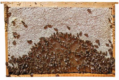 potentiality: Casi completamente ??????? cera un marco con miel. En sus panales m�s n�ctar y m�dicos  Foto de archivo