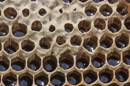 The nectar of a bee delivered in beehives was transformed into medical Honeycombs by them close wax. photo