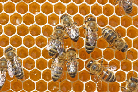 potentiality: The nectar of a bee delivered in a beehive will transform in medical