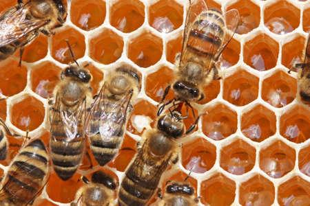 potentiality: Las abejas transferir uno otros n�ctar o m�dicos  Foto de archivo
